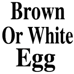 Brown Or White Egg